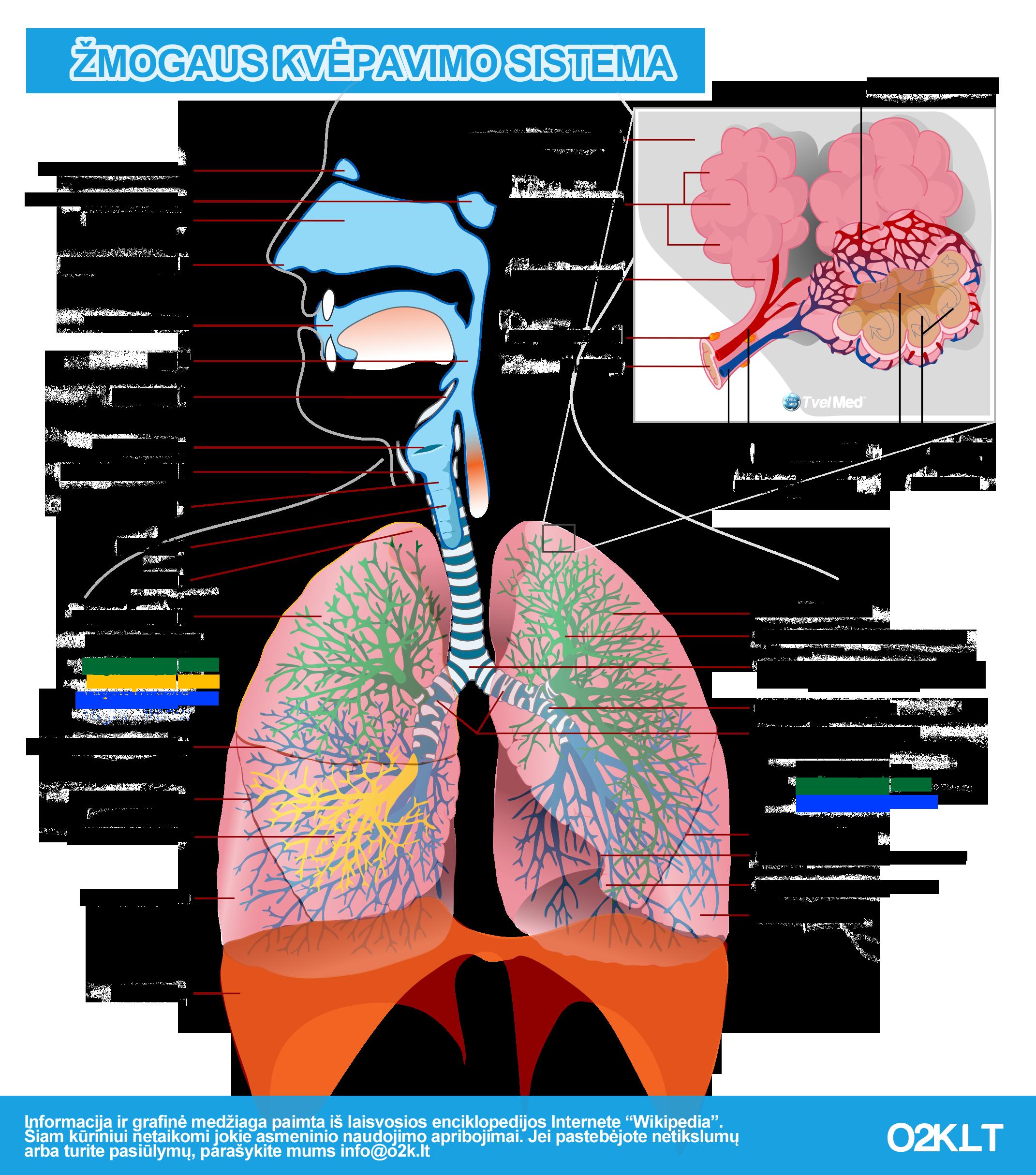 Zmogaus kvepavimo sistema