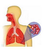 Žmogaus plaučiai